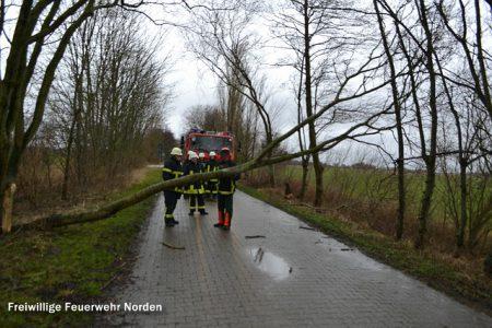 Astbeseitigung Altendeichsweg, 27.12.2013