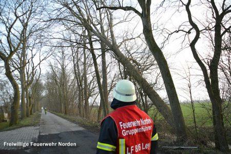 Umgestürzte Bäume, 10.01.2015