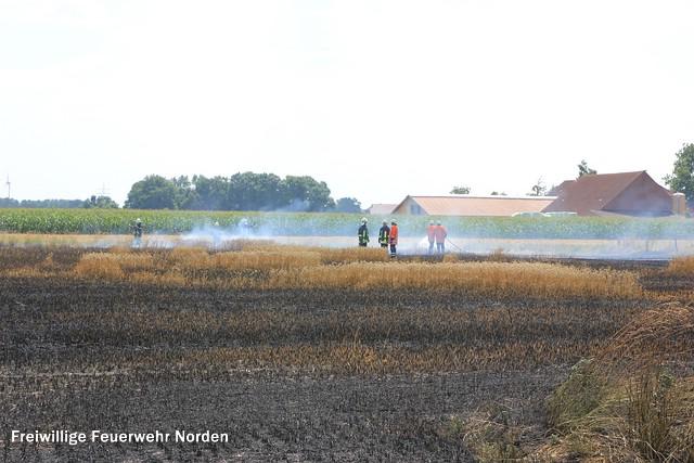 Flächenbrand, 03.08.2014
