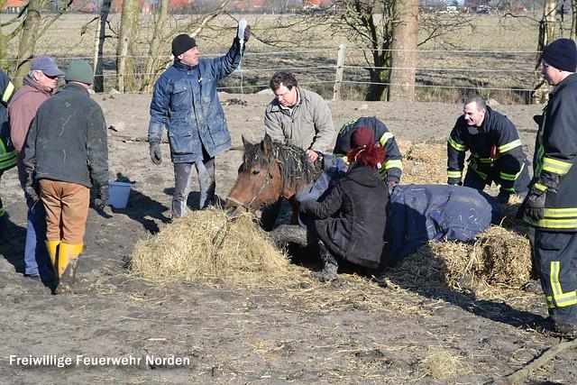 Pferderettung, 25.03.2013
