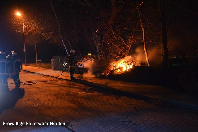 Heckenbrand, 09.03.2014